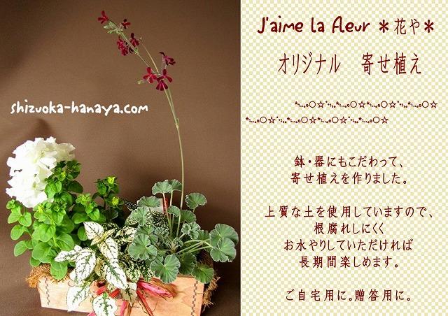 寄せ植え 静岡 花や 苗 プレゼント